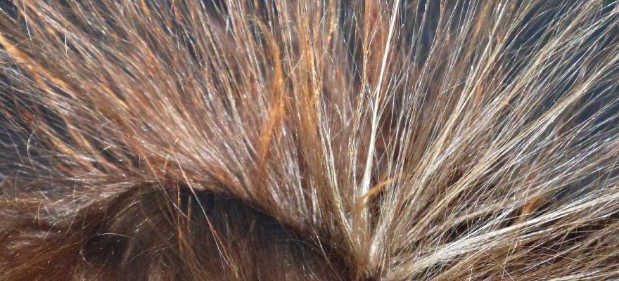 Elektrische Haare